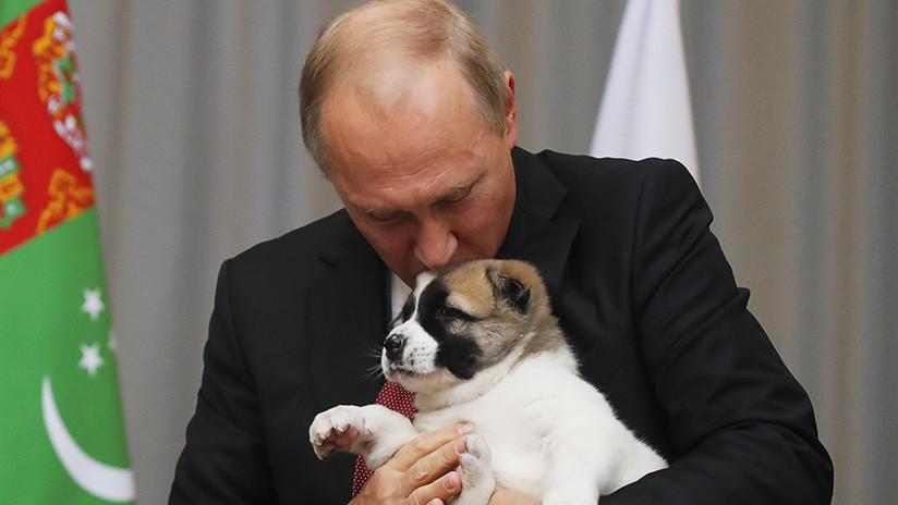 Putin firma la ley que endurece el castigo por delitos de crueldad hacia los animales