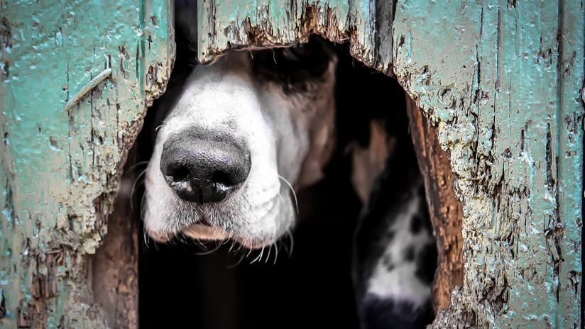Revelan los macabros detalles de la muerte de la joven devorada por sus perros