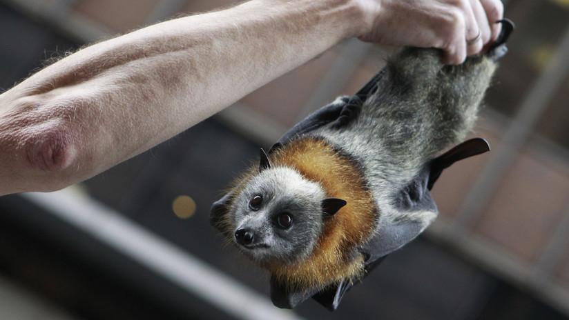 ¡Qué vivan los murciélagos!: El 'batman' mexicano que quiere salvar el tequila