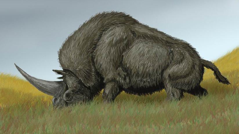 FOTO: Hallan restos del 'último unicornio'