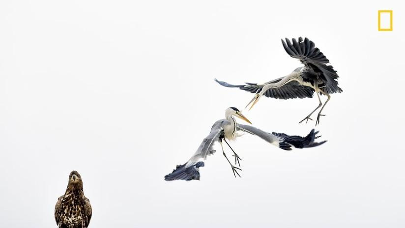 National Geographic muestra sus mejores fotografías del año