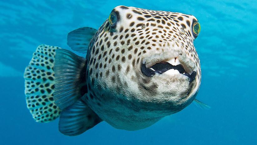 ¿Alienígenas o seres fabulosos? Los raros peces hallados por un marino ruso saltan a la Red (FOTOS)