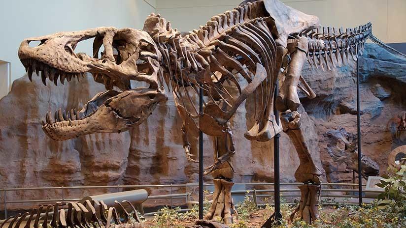 Nuevas revelaciones: ¿Cómo era realmente el 'Tyrannosaurus rex'? (IMÁGENES)