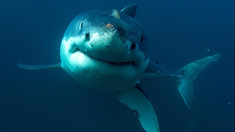 FOTOS: Tiburones se congelan hasta morir por las frías temperaturas en EE.UU.
