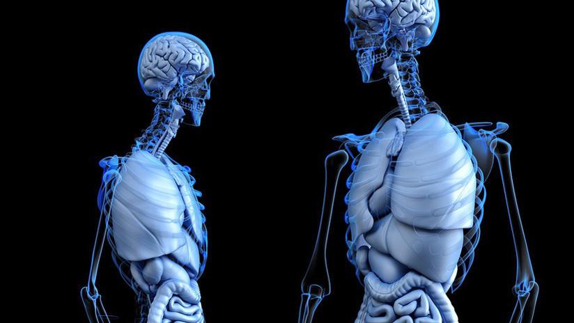 No todos los órganos son 'tan' vitales: ¿Sabe de qué 7 podríamos prescindir?