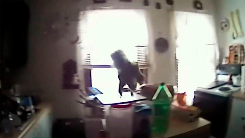 'Violento ataque' de una ardilla a la Policía de Nueva York