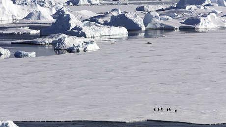 Pingüinos Adelie y focas en una plataforma de hielo que flota en el canal Crystal Sound de la Península Antártica, Antártida.