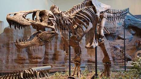 Holotipo de Tyrannosaurus rex en el Museo de Historia Natural Carnegie, Pittsburgh, Estados Unidos.