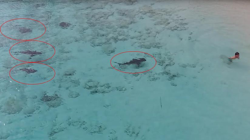 VIDEO: Instante en que un niño se salva de ser atacado por cuatro veloces tiburones