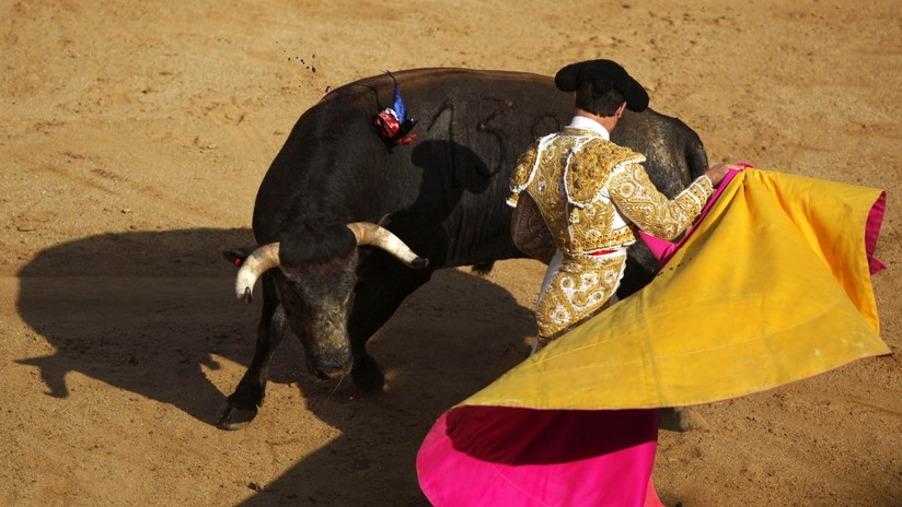 La sangre llama: salta a proteger a su hermano novillero que fue embestido por un toro (FOTOS)