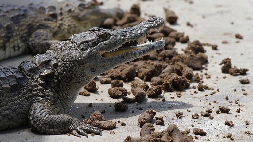 Un turista de 90 años de edad muere por un ataque de cocodrilos en Zimbabue