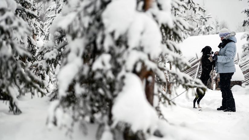 Dos niños sobreviven en un bosque congelado de Rusia con la ayuda de sus perros