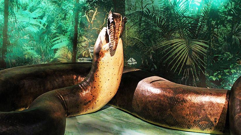 La serpiente prehistórica más grande del mundo 'se cuela' en un museo de EE.UU.