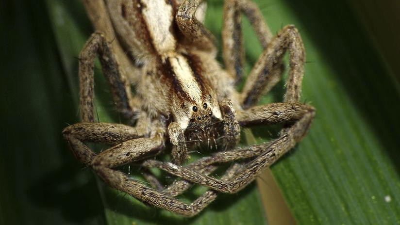 VIDEO: ¿Qué es esta extraña criatura de '16 patas'?