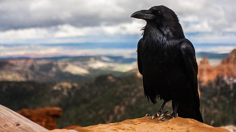 VIDEO: Un pájaro 'se cuela' en una transmisión del pronóstico del tiempo en EE.UU.