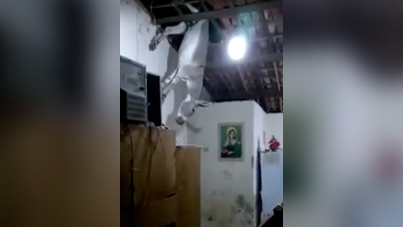 """Desliz animal: """"No hay lluvia, pero en su lugar nos caen burros"""" (VIDEO)"""
