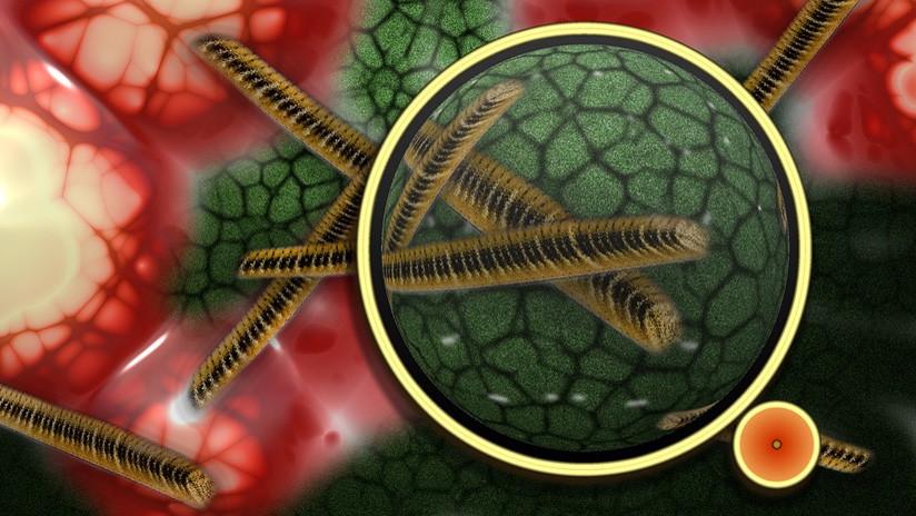 Alertan de una peligrosa y silenciosa superbacteria de transmisión sexual resistente a antibióticos