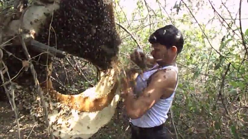 Un recolector de miel en India tiene un insólito método para alejar a las abejas del panal (VIDEOS)