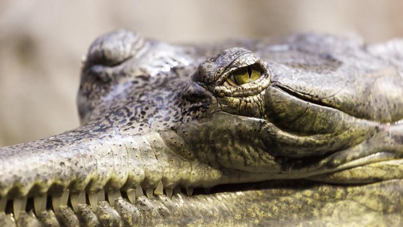 Hallan en pleno invierno ruso a un cocodrilo enorme en el sótano inundado de un edificio residencial