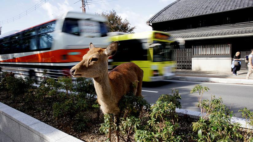 Japón: Trenes braman y ladran para evitar colisiones con los ciervos