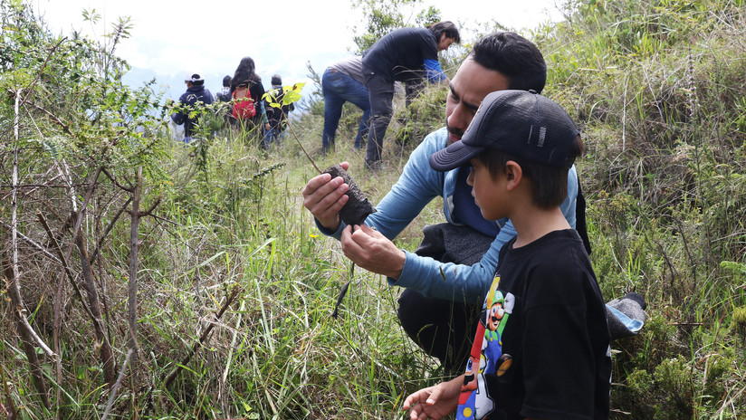 Inyección forestal: Plantan 5.000 árboles en uno de los dos volcanes habitados del planeta