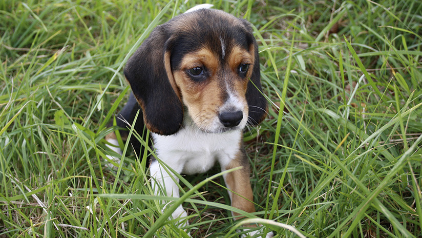 Rusia: Un cachorro dispara y mata a su dueño