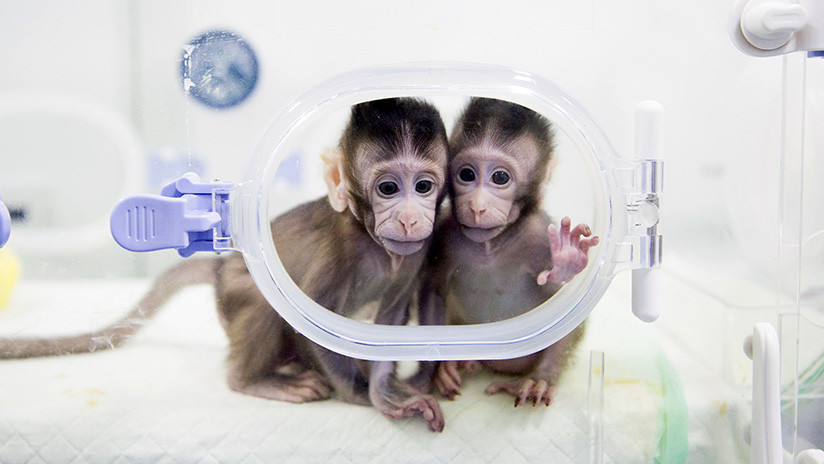 """Un hito científico: """"La barrera técnica para clonar humanos está ahora rota"""""""