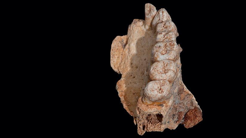Un fósil que lo cambia todo: Hallan en Israel el resto de Homo Sapiens más antiguo fuera de África