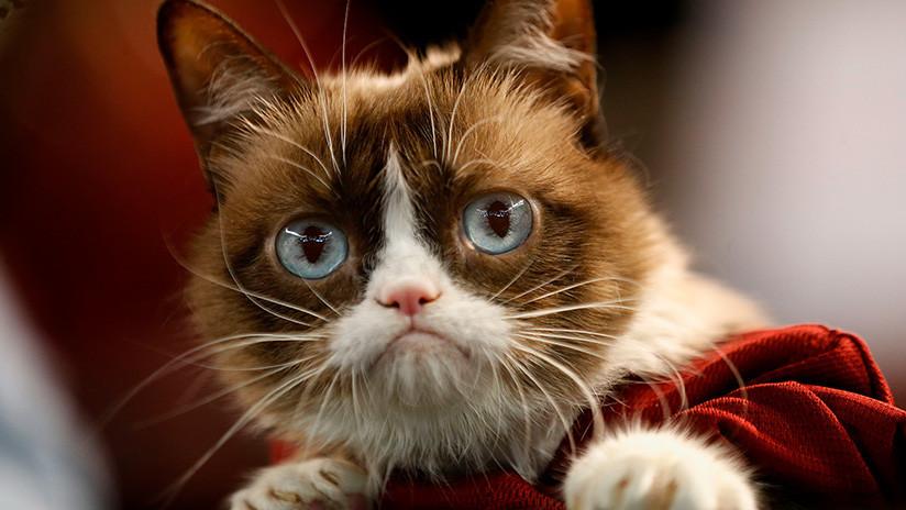 La gata gruñona Grumpy Cat gana una demanda por 710.000 dólares