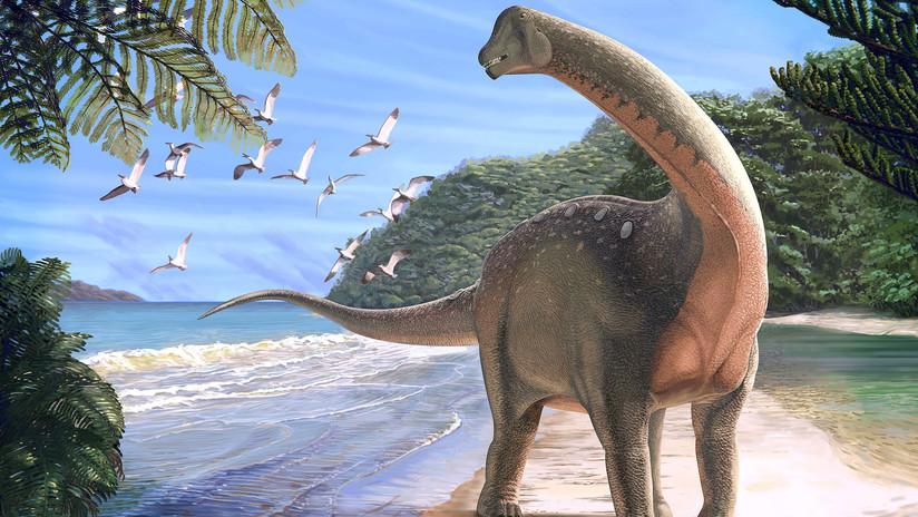 Encuentran en Egipto el fósil de un dinosaurio del tamaño de un autobús (FOTOS)