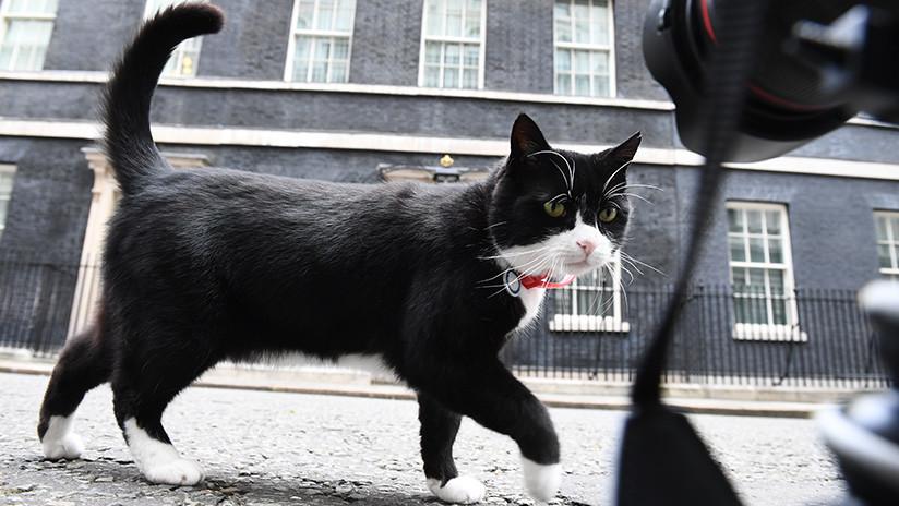 La Cancillería británica prohíbe alimentar a su gato ratonero