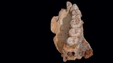 El fósil hallado en la cueva Misliya en Israel, el 25 de enero de 2018.