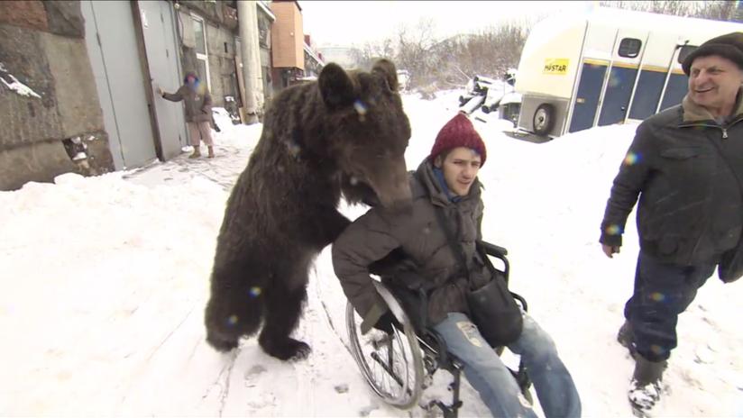 Un oso empuja la silla de ruedas de su entrenador, que sufrió un grave accidente (VIDEO)