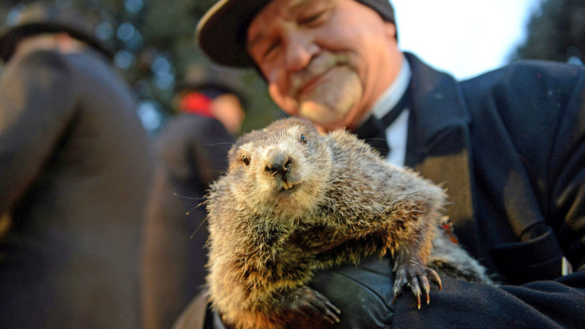 VIDEO: La marmota Phil 'predice' seis semanas más de invierno