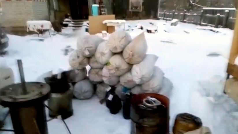 Policía incauta 150 kilogramos de marihuana en un jardín de Siberia