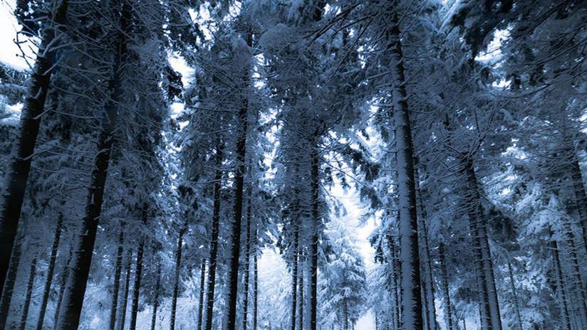 """""""Estoy muerto... Ya es tarde"""": Un ruso sobrevive cinco días en un bosque a 30 grados bajo cero"""
