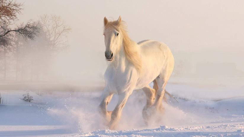 VIDEO: Un caballo galopa con un gomón de nieve por las calles de Moscú y sorprende a los conductores