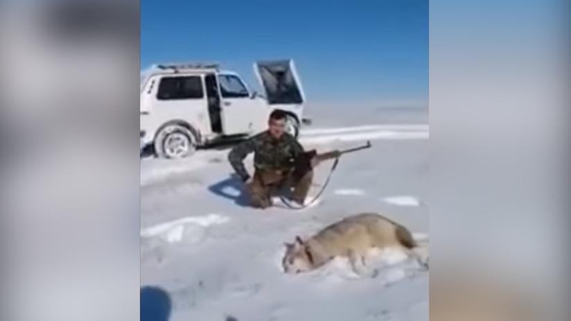 El karma hace justicia: Un lobo vuelve a la vida para vengarse de su cazador (VIDEO)