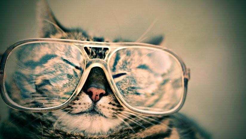 ¿La gata John Lennon?: Este felino con gafas conquista las redes sociales