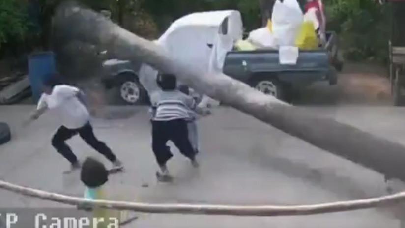 VIDEO: Un niño se salva por los pelos de que le aplaste una palmera de más de 9 metros