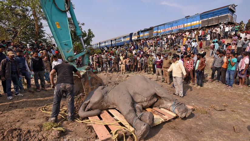 Tren arrolla y mata a cinco elefantes en la India (FUERTES IMÁGENES)