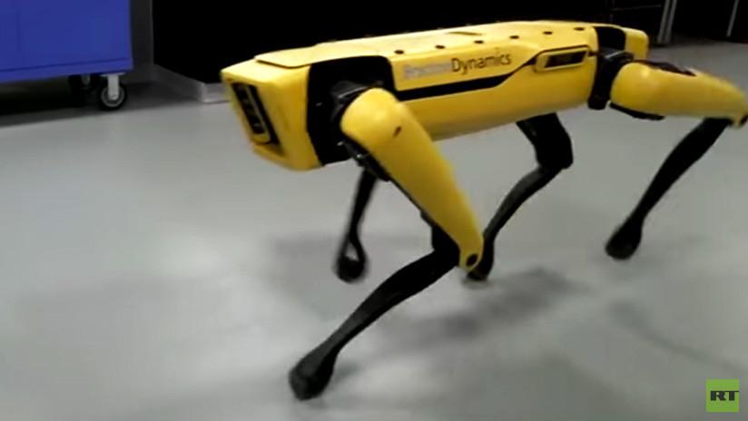 Demasiado inteligentes: Un perro robot ha 'aprendido' a escapar de una habitación (VIDEO)