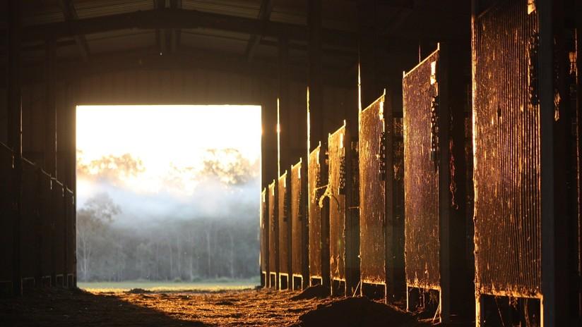 Comando armado ataca un rancho y mata a un hombre y 15 caballos en México (FUERTES IMÁGENES)