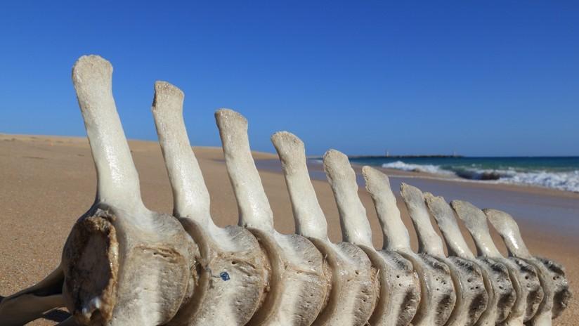 Revelan el misterio de los esqueletos hallados en una costa argentina
