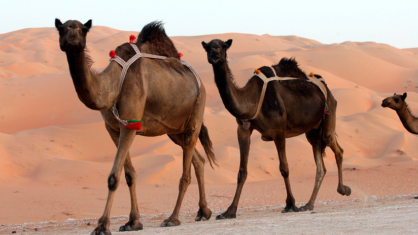 Descubren esculturas sin precedentes en el desierto de Arabia Saudita