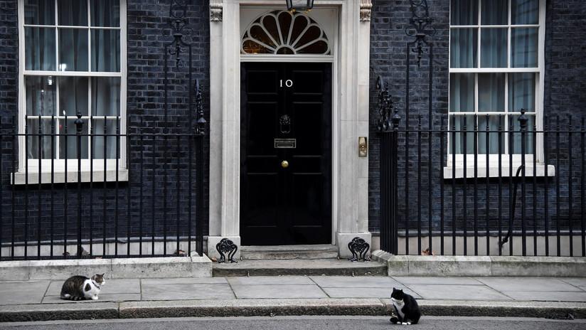 """""""Por culpa del 'Brexit'"""": Se pelean los gatos de la primera ministra y de la Cancillería británica"""