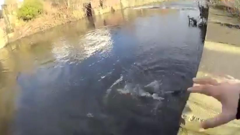 VIDEO: Cámara corporal graba cómo un policía se lanza a un río helado para salvar a un hombre