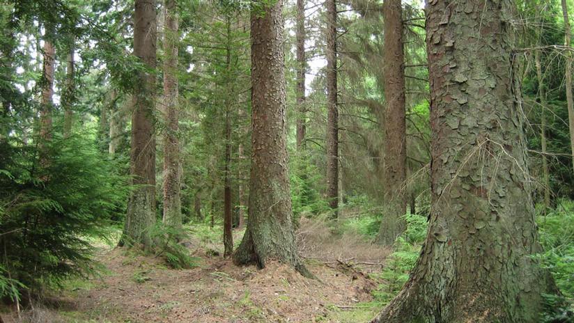 El solitario árbol que atestigua la huella del ser humano en la Tierra