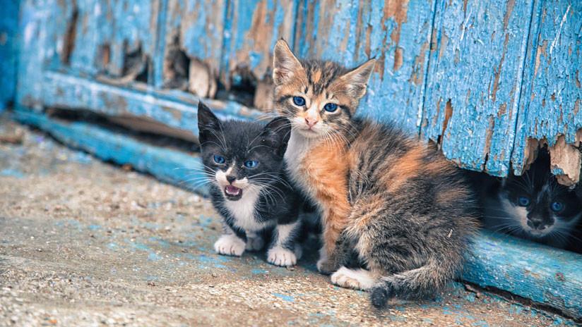 Twitter celebra el Día Internacional del Gato