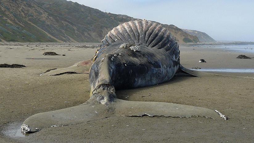 Chile: Se graban sobre una ballena azul muerta y desatan la indignación en las redes sociales